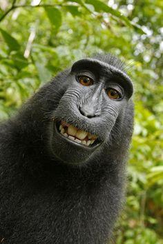 #Monkey Smile!