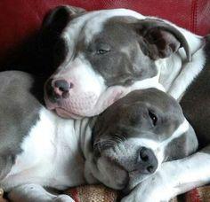 Gorgeous i want them