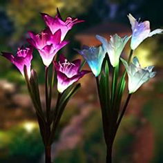 Outdoor Solar Garden stake Lights - 2 Pack Solarmart Solar Powered Lights with 4 Lily Flower, Multi-color Changing LED Solar Stake Lights for Garden, Patio, Backyard (Purple and White) Solar Flower Lights, Solar Lawn Lights, Solar Powered Lights, Luz Artificial, Artificial Flowers, Garden Lamps, Garden Statues, Solar Garden Stakes, Luz Solar