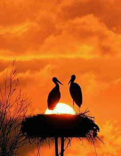 stork nest in the sunset. Photo by Tamás Rajna via 500 px Beautiful Sunset, Beautiful Birds, Beautiful World, Sunset Love, Simply Beautiful, Vintage Illustration, Cool Photos, Beautiful Pictures, Tier Fotos