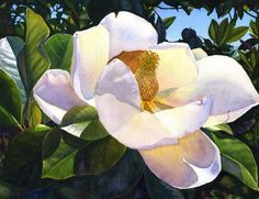 White Magnolia, art watercolor painting print by Cathy Hillegas, 12x16, Sun Kissed Magnolia, white, yellow, blue, green