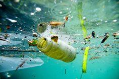 'Il mare senza plastica' di Crescenza Caradonna