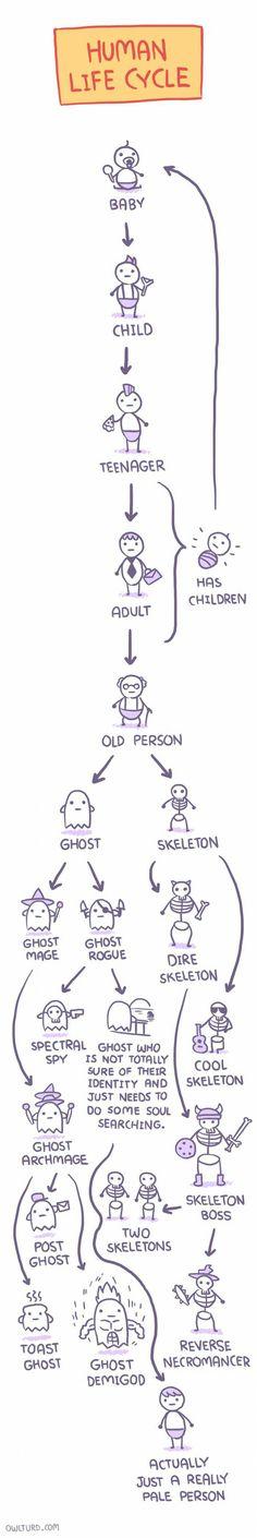 Huma life cycle. - Imgur