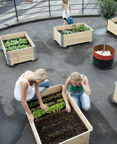 Stop Worrying About The Amount Of Space Needed For Your Kitchen Garden Or Even Your Gardening Abilities