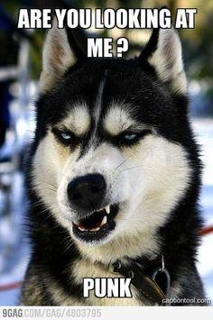 Badass Dog!