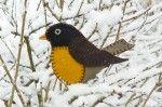 Longing for Spring Felt Robin Ornament