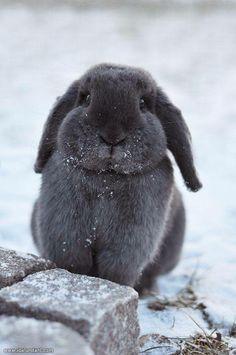 Floppy earred cuteness!