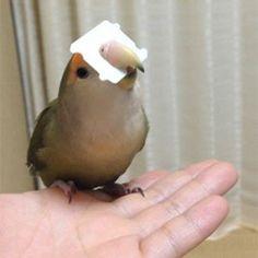 鳥フォトコンテスト「はるさめ」さん