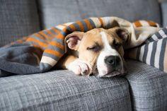 Quand votre animal de compagnie est souffrant, vous l'êtes aussi car il fait partie de vous, il est de la famille et c'est difficile de rester insensible à sa douleur. Que faire pour soulager votre chien, ou vote chat avant de trouver une solution définitive chez le vétérinaire? Voici un petit rituel qui va vous aider.