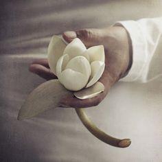 White Lotus symbol of purity
