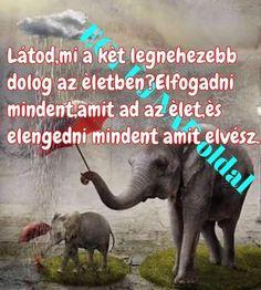 Elephant, Animals, Animales, Animaux, Elephants, Animal, Animais
