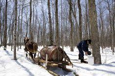 Una ruta muy original en #Quebec es la del sirope de arce. Os lo contamos en la revista Viajeros. ©Fotografías: Turismo Quebec #Canadá