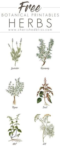 These lovely Free Spring Herb Printables are a simple a cheap way to decorate your home for the Spring! Click to Download all 6!