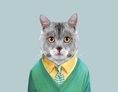 Domestic-Cat---Felis-catus-copia