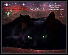 Scorpio cat astrology. Find out if your cat is a Scorpio.