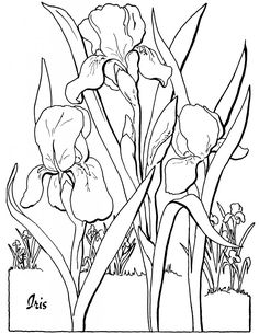 Free Adult Floral Coloring Page! - The Graphics Fairy
