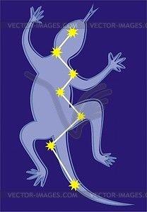 Constellation Lacerta - vector clipart
