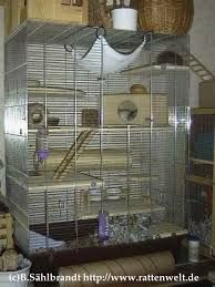 you little rat all creatures great and small pinterest rats and creatures. Black Bedroom Furniture Sets. Home Design Ideas