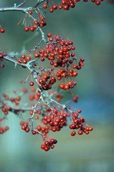 january berries.