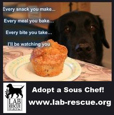 Need a professional taster?  Adopt a completely unbiased lab to confirm your culinary skills!