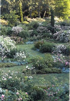 Valley of Roses, Landriana. Russell Page, Portraits of Italian Gardens.