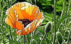 Flower359 of 365