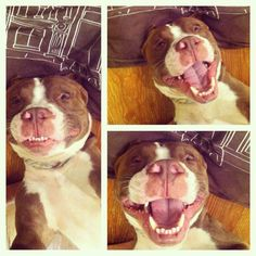 Smiles are contagious. Let the happiness spread! - I can't stop laughing!!!