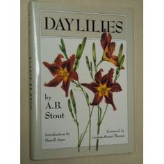 Daylilies by Arlow Burdette (A.B.) Stout.  American botanist, was born March 10, 1876 in Ohio. He would become renown for his work in hybridizing daylilies; in recognition of his work, the American Hemerocallis Society created the Stout Award in his honor in 1950.