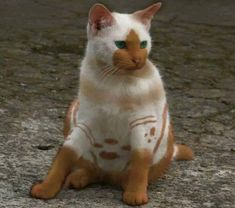 The most unusual markings I've ever seen. So cute.
