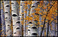 Elysian October. Aspen trees in full fall foliage. Landscape painting by Johnathan Harris.