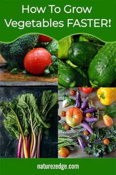 Learn How to Maximize Vegetable Growth in your Garden. We detail what to consider when you want to achieve the highest vegetable garden yield. Don't invest a lot of time into planting and only get minimal harvests. Learn how you can ensure you get the most out of your garden. Includes list of fast growing vegetables and steps to increase veggie growth. Vegetable Garden Tips | Vegetable Yield #growvegetablegarden Fast Growing Vegetables, When To Plant Vegetables, Winter Vegetables, Organic Vegetables, Vegetable Garden Planning, Vegetable Garden For Beginners, Backyard Vegetable Gardens, Vegetable Garden Design, Organic Gardening Tips