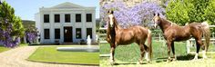 De Wetshof Wine Estate Manor House Vintage Wine, Wines, Africa, Horses, Journal, Horse, Journal Entries, Journals, Words