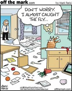 Off the Mark von Mark Parisi für den Dezember 2017 - Humor - Cats Cat Jokes, Funny Animal Memes, Funny Animal Pictures, Funny Animals, Cute Animals, Animal Humor, Cat Humour, Animals Beautiful, Crazy Cat Lady