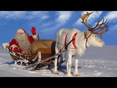 Best reindeer rides of Santa Claus in Lapland
