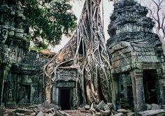 The ruins of Ta Prohm, near Siem Reap, Cambodia.   Ta Prohm is a Khmer temple ruin not far from Angkor Wat.  In places, the trees grow through, around, and over the ruins.