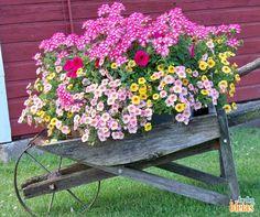 Não é porque estamos no outono, que você vai deixar de ter um jardim florido!