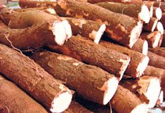 Healthwise: Manioc's Vitamin B17 kills the cancer cell in humans