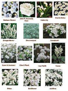 Garden Grove - Moon Garden, lots of white flowers. Shade Garden, Garden Plants, White Plants, Balloon Flowers, Garden Types, Garden Pictures, White Gardens, Planting Flowers, White Garden Flowers