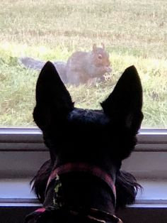 """Ear """"sites"""" set for squirrel! Arf, lemme at 'im. Squirrel, Ear, Horses, World, Dogs, Animals, Animales, Animaux, Squirrels"""