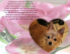 It has been over 2 years since our Rusty went to Rainbow Bridge. I still miss him everyday. I don't think it ever gets easier.