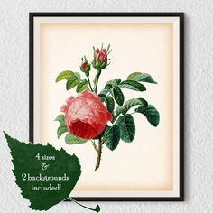 Vintage flower print Rose wall art Pink by RestoredBotanicalArt