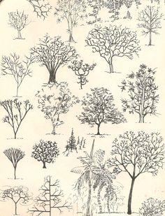 Estudo de árvores e arbustos para desenho de arquitetura
