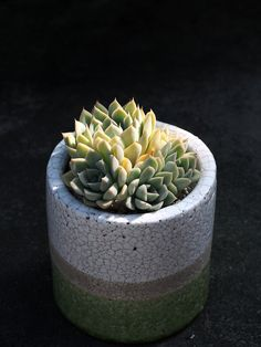 favd_succulents-and-cacti-June 11 2017 at 02:51PM