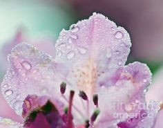 Beauty Of Rain Photograph by Kerri Farley - Beauty Of Rain Fine Art Prints and Posters for Sale fineartamerica.com