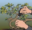 How to Create a Bonsai Tree: 8 Steps - wikiHow