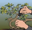 How to Create a Bonsai Tree: 8 Steps - wikiHow