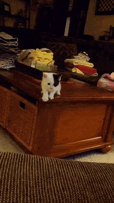 New GIF tagged via Giphy http://ift.tt/1ZMgzwA