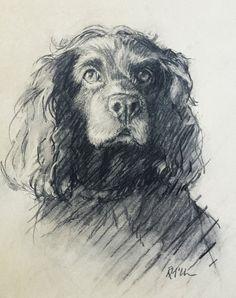 Charcoal sketch of Joy, a boikin spaniel by Rebecca McClure