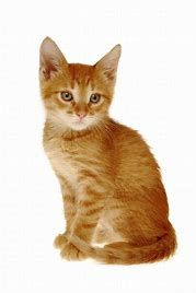 6 Signs Your Cat Is Angry Orange Cats Cats Orange Kittens