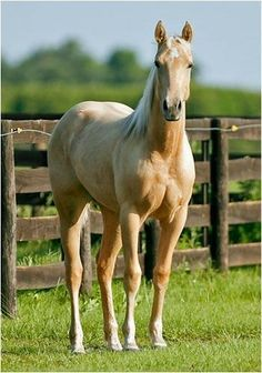 Yes, please, I need this horse!